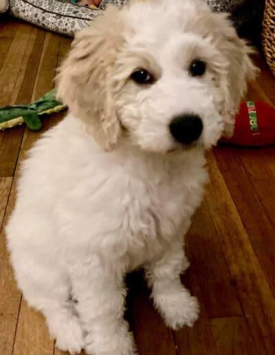 Puppy 1 - Second litter