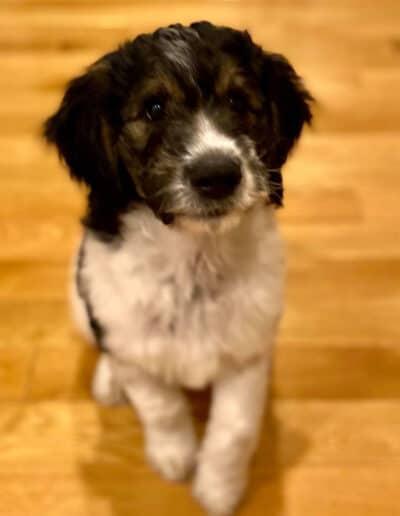Puppy 2 - Second litter