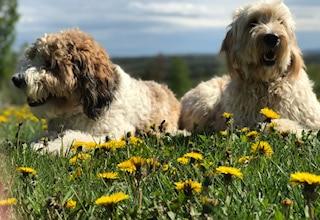 Dalton and Remi in grass